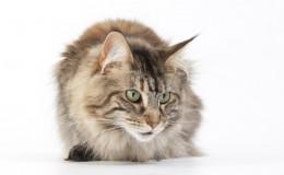 Fam Etienne katten_199